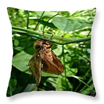 Moth At Rest Throw Pillow