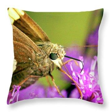 Moth On Purple Flower Throw Pillow