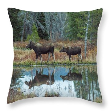 Mother And Baby Moose Reflection Throw Pillow by Rebecca Margraf