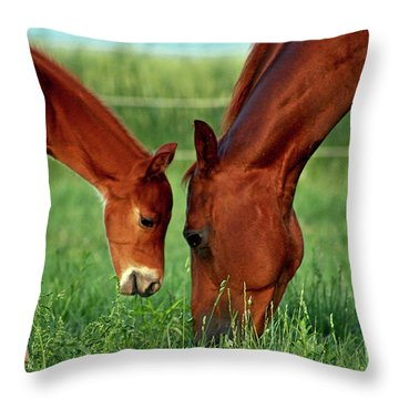 Mother And Foal 3377 H_2 Throw Pillow