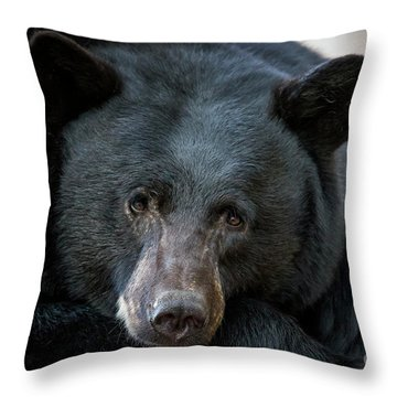 Mother Bear Throw Pillow by Mitch Shindelbower
