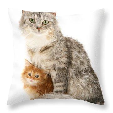 Mother Cat And Ginger Kitten Throw Pillow