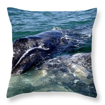 Mother Grey Whale And Baby Calf Throw Pillow