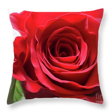 Mother's Day Rose Throw Pillow by Anita Oakley