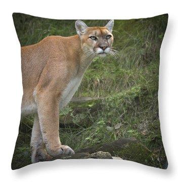 Mountain Lion Throw Pillow