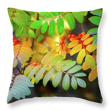 Mountain Ash Fall Color Throw Pillow by Michele Penner