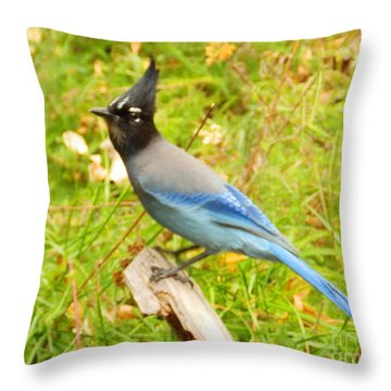 Mountain Blue Jay Throw Pillow