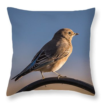 Mountain Bluebird At Sunset Throw Pillow