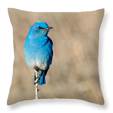 Mountain Bluebird On A Stem. Throw Pillow