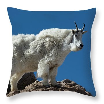 Throw Pillow featuring the photograph Mountain Goat 2 by Gary Lengyel