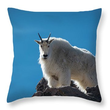 Throw Pillow featuring the photograph Mountain Goat 3 by Gary Lengyel