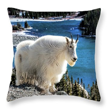 Mountain Goat At Lower Blue Lake Throw Pillow