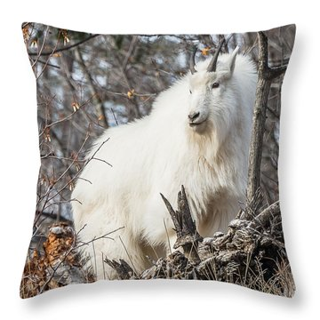 Throw Pillow featuring the photograph Mountain Goat Pride by Yeates Photography