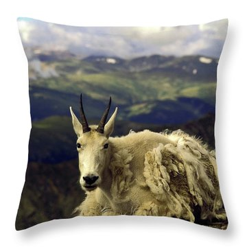 Mountain Goat Resting Throw Pillow by Sally Weigand