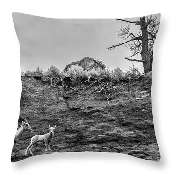 Mountain Goat With A Kid For A Walk Throw Pillow