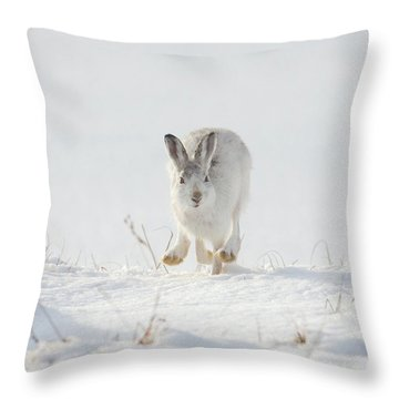 Mountain Hare Approaching Throw Pillow