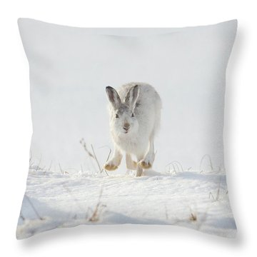 Mountain Hare Approaching Throw Pillow