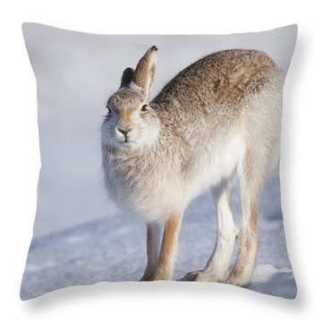 Mountain Hare In The Snow - Lepus Timidus  #2 Throw Pillow