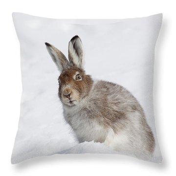 Mountain Hare In Winter Throw Pillow