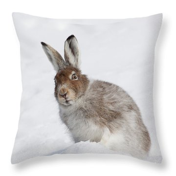 Throw Pillow featuring the photograph Mountain Hare In Winter by Karen Van Der Zijden