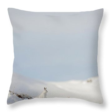 Mountain Hare On Hillside Throw Pillow