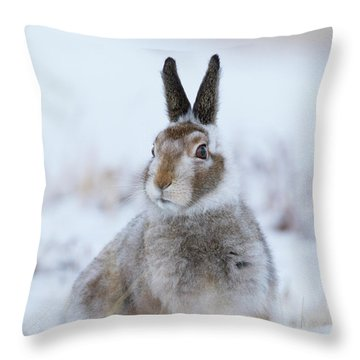 Mountain Hare - Scotland Throw Pillow