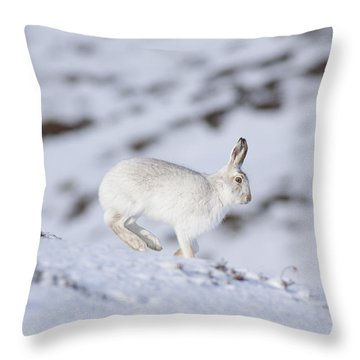 Mountain Hare - Scottish Highlands  #12 Throw Pillow