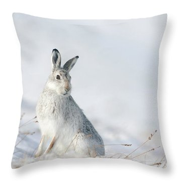 Mountain Hare Sitting In Snow Throw Pillow