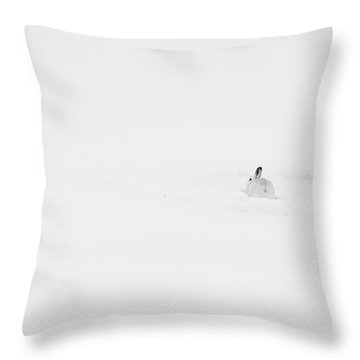 Mountain Hare Small In Frame Right Throw Pillow