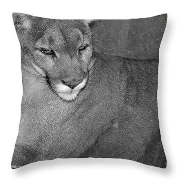 Mountain Lion - Sonoran Desert Museum  Throw Pillow by Donna Greene