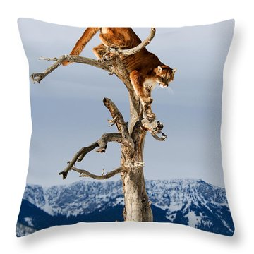 Mountain Lion In Tree Throw Pillow