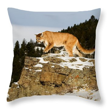 Mountain Lion On Rocks Throw Pillow