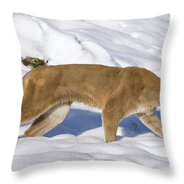 Mountain Lion Puma Concolor Hunting Throw Pillow by Matthias Breiter