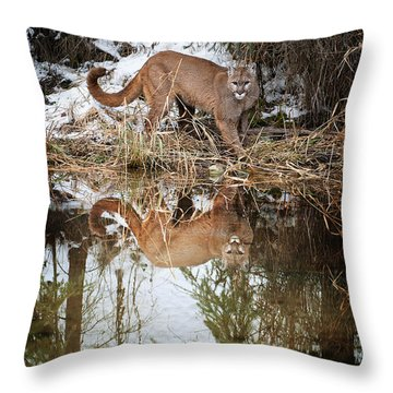 Mountain Lion Reflection Throw Pillow