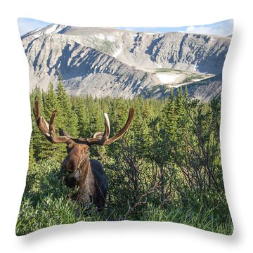 Mountain Moose Throw Pillow