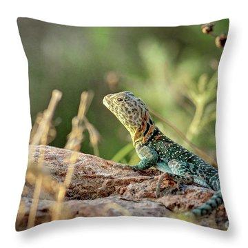 Mountian Boomer Throw Pillow
