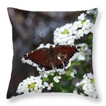 Mourning Cloak Throw Pillow