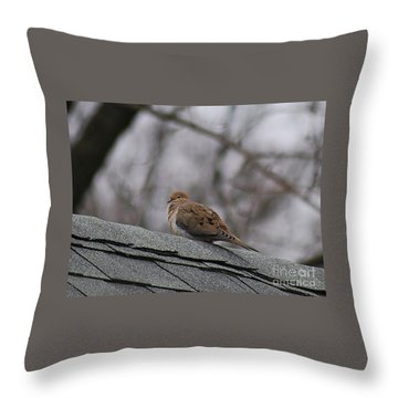 Mourning Dove 20120318_1a Throw Pillow by Tina Hopkins