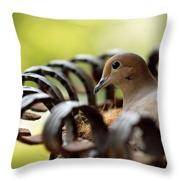 Mourning Dove In A Flower Planter Throw Pillow by Debbie Oppermann