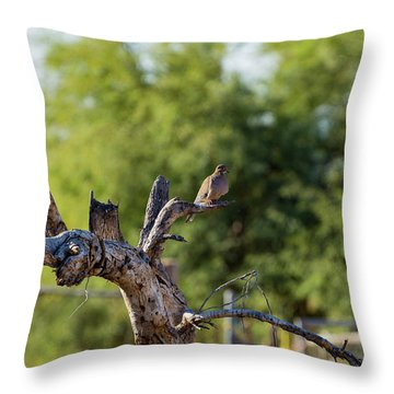 Mourning Dove In Old Tree Throw Pillow