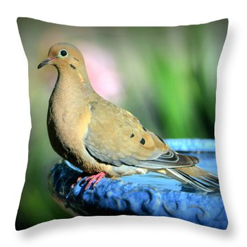 Mourning Dove Perched Throw Pillow