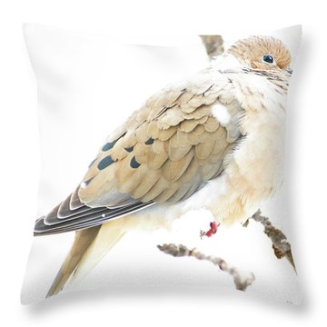 Mourning Dove, Snowy Morning Throw Pillow