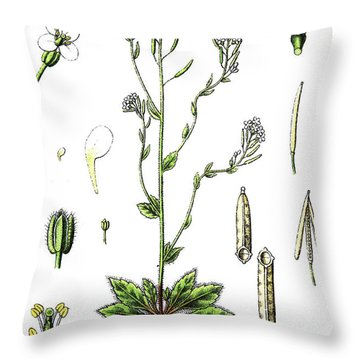 Mouse-ear Cress Or Arabidopsis Throw Pillow