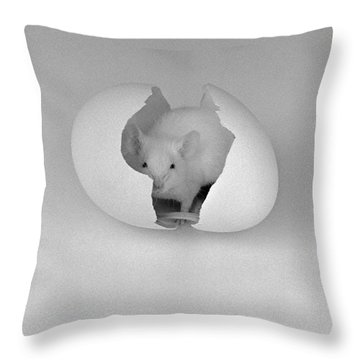 Throw Pillow featuring the photograph Mouse House by Michael Swanson