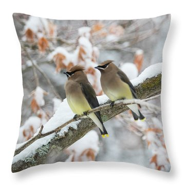 Throw Pillow featuring the photograph Mr. And Mrs. Cedar Wax Wing by Betty Pauwels