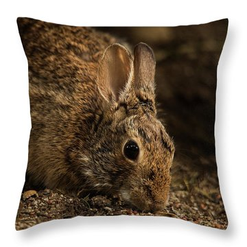 Mr. B Throw Pillow