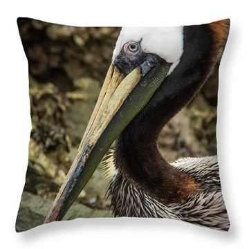 Mr. Cool Wildlife Art By Kaylyn Franks Throw Pillow