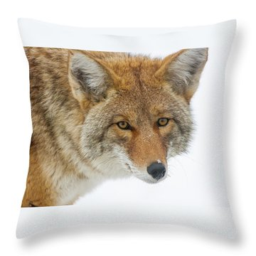 Mr. Coyote Throw Pillow