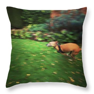 Mr Finly Enjoying A Few Rapid Laps Of Throw Pillow