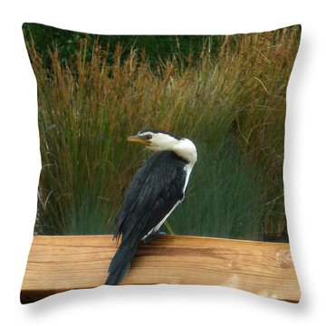 Throw Pillow featuring the photograph Mr Frederick Higgins Looks Around by Mark Blauhoefer